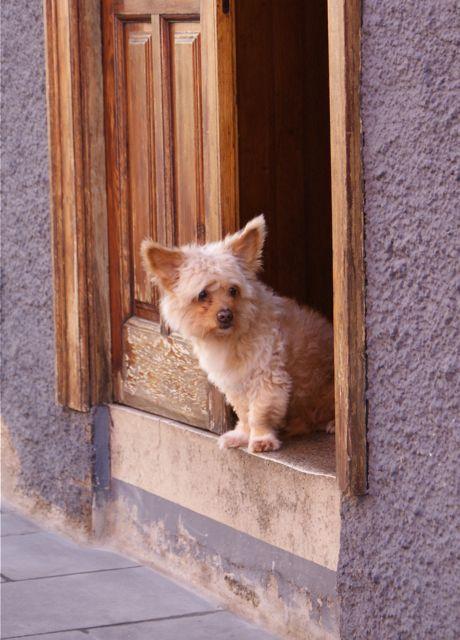 Hund kikker på forbipasserende