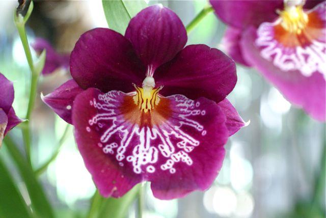 Orkide 3.