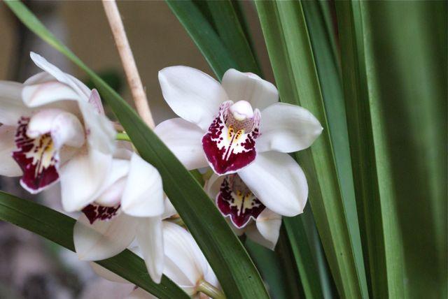Orkide 5.