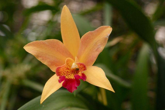 Orkide 6.