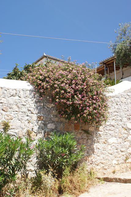 Frodige hengeblomster pryder hus og murer
